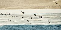 Birds flying above coastline in Svalbard, Norway