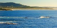 Water off the coast of Coffs Harbour, Australia