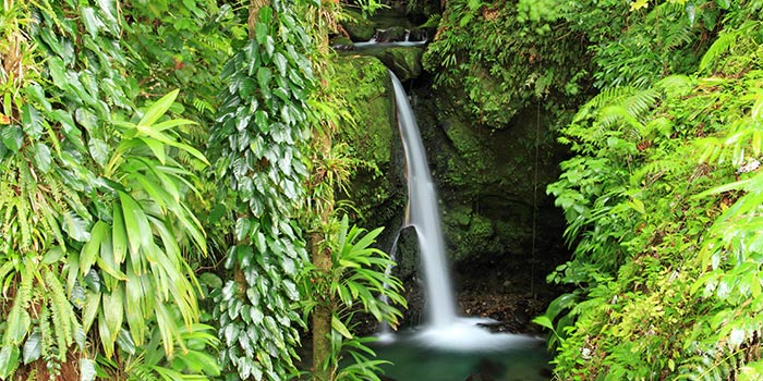 A waterfall pouring through the green tropical jungle.