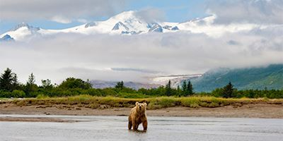 Mountain panorama with Grizzly bear in Hallo Bay, Alaska